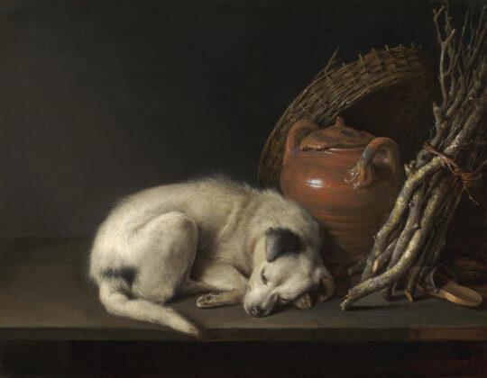 Dog at Rest